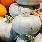 Seasonal Favourite: Homegrown Blue Prince Squash