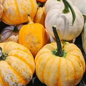 Seasonal Favourite: Homegrown Decorative Gourds