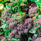 Seasonal Favourite: Homegrown Purple Sprouting Broccoli