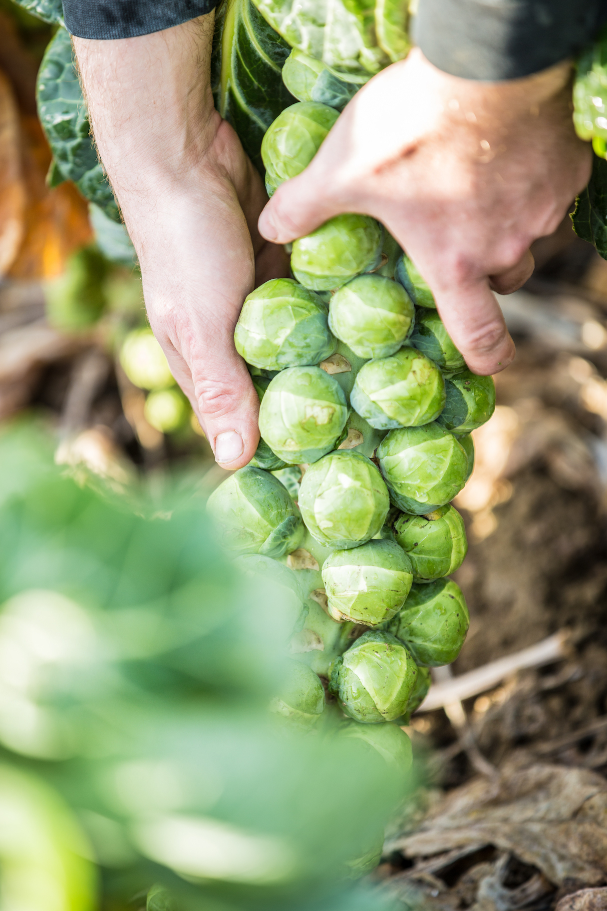 Our guide to brilliant Brussels Sprouts